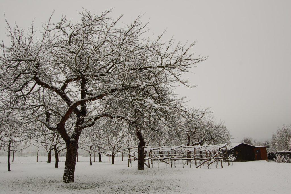 Winter im Vereinsgarten